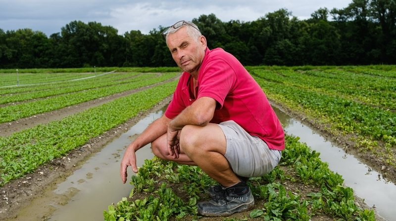 En raison des pluies diluviennes, nos agriculteurs tirent la langue