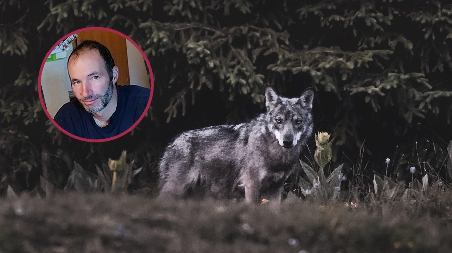 Loup dans le Jura vaudois: pour cet éleveur, «il n'y a pas de solution miracle»