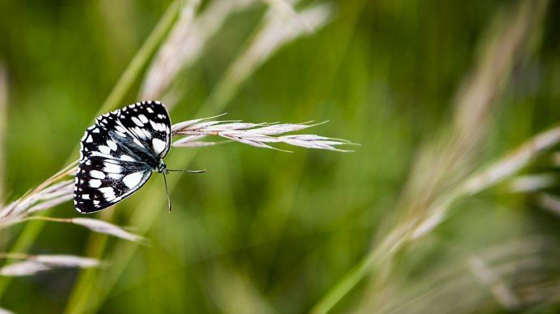 Les communes peuvent prendre des mesures pour favoriser la biodiversité (image prétexte).