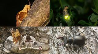 Ces insectes qui peuplent nos nuits