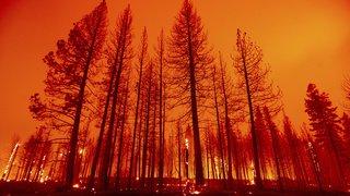 Incendies en Grèce, collision ferroviaire en Tchéquie, audience papale,...: la galerie photos du 4 août 2021