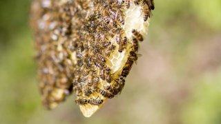 Les gestes à adopter en cas de piqûres d'abeille, de guêpe ou de frelon