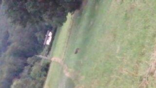 Vidéo 2: un loup aperçu à Mollens