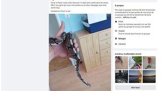 A Morges, «Oscar», le python «fugueur» a été localisé par son propriétaire