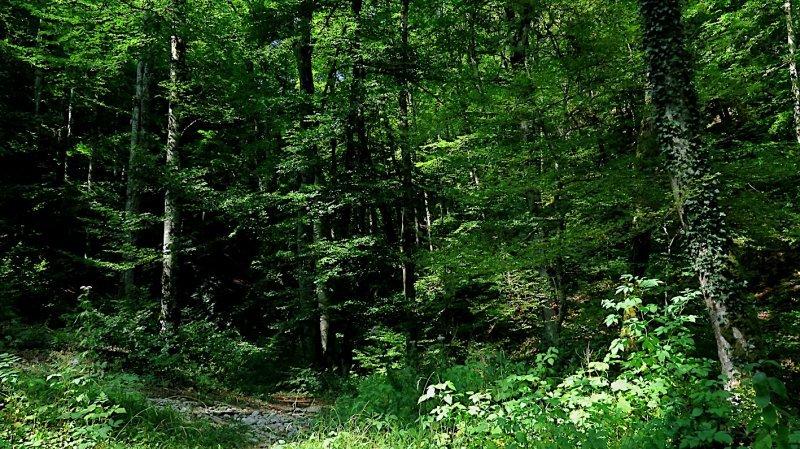 Malgré les pluies de juillet, les forêts de la région souffrent