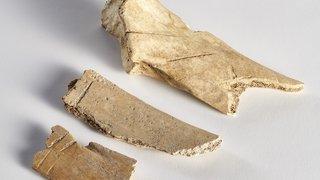 Dimanche découverte: Archéozoologie, quand les ossements parlent