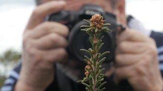 """Projection de """"Paroles de plantes"""" de D. Cretinon"""