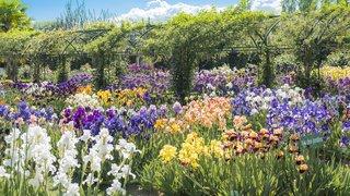 Visitez les jardins du Château de Vullierens