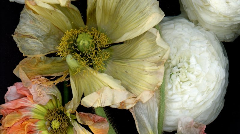 Nyon: les rêveries florales de Katharina von Flotow éclosent au château