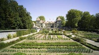 Visite guidée - Jardin potager