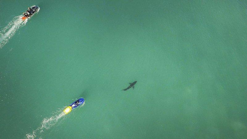 Afrique du Sud: un requin blanc interrompt une compétition de surf