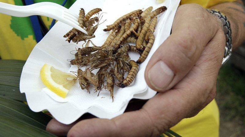 Alimentation: la vente d'insectes à manger est retardée