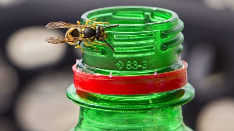 Allergies: le Centre d'allergie suisse aha! met en garde contre les piqûres de guêpes