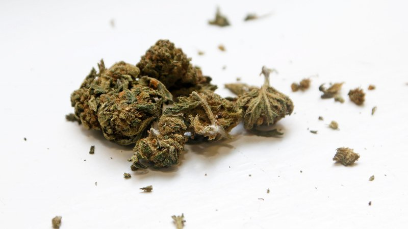 Même texture, même odeur. L'herbe CBD ressemble en tous points à son cousin prohibé. Si ce n'est qu'elle contient une très faible dose de THC.