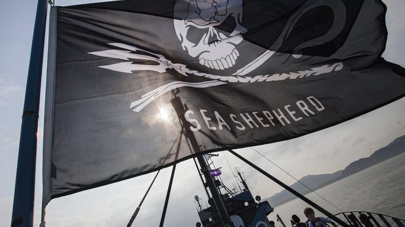 Antarctique: Sea Shepherd renonce à traquer les baleiniers japonais