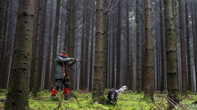 Économie forestière: la chasse est essentielle aux forêts suisses