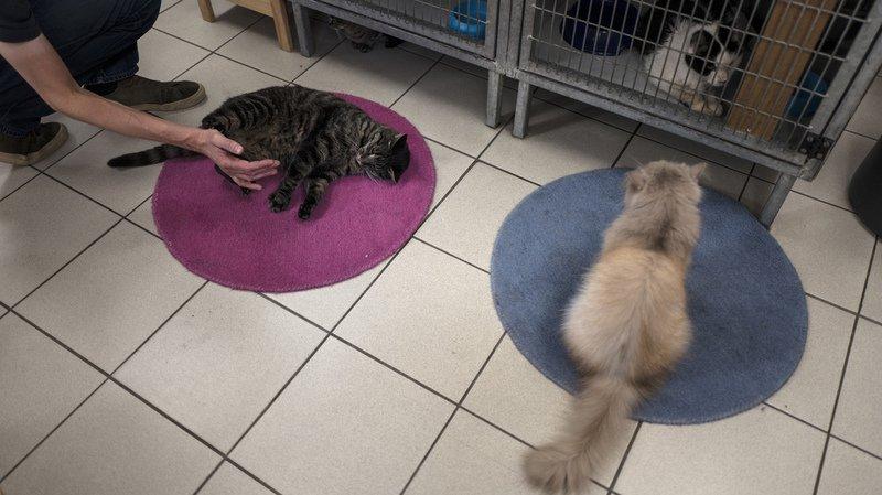 Animaux: plusieurs SPA imposent d'adopter deux chats à la fois