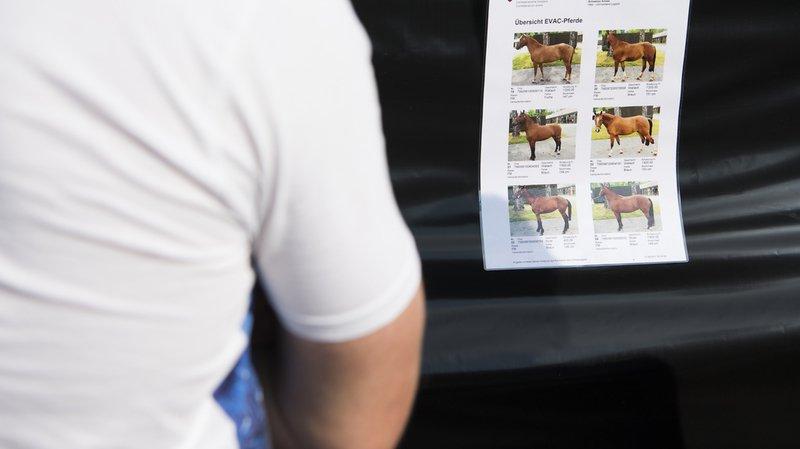 Thurgovie: l'éleveur ne maltraitait pas que des chevaux