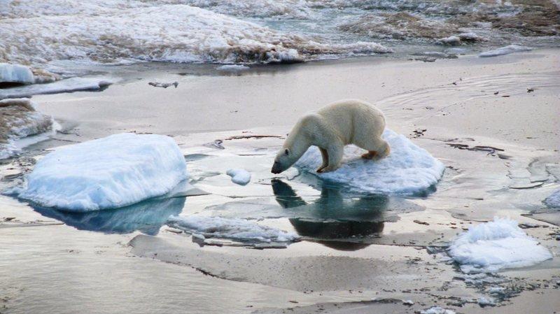 Le règlement stipulerait qu'il est interdit d'aller à la rencontre des ours polaires d'une manière telle qu'ils soient dérangés.
