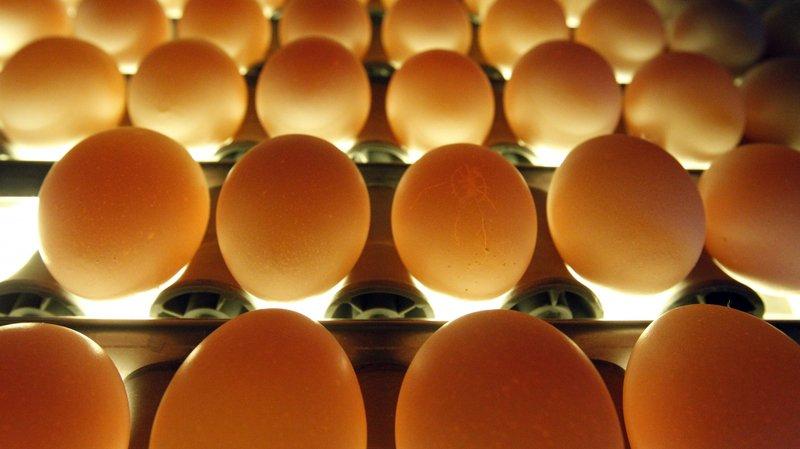 Pas de fipronil dans les œufs suisses