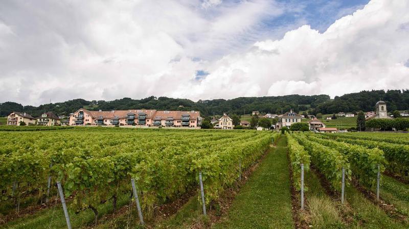 Sept vins de La Côte médaillés d'or au mondial des pinots