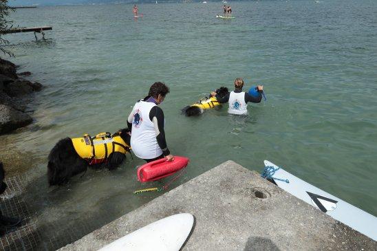 Venez nager avec les chiens Terre Neuve