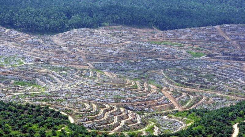 Environnement: les tropiques dégagent désormais davantage de CO2 qu'ils n'en capturent