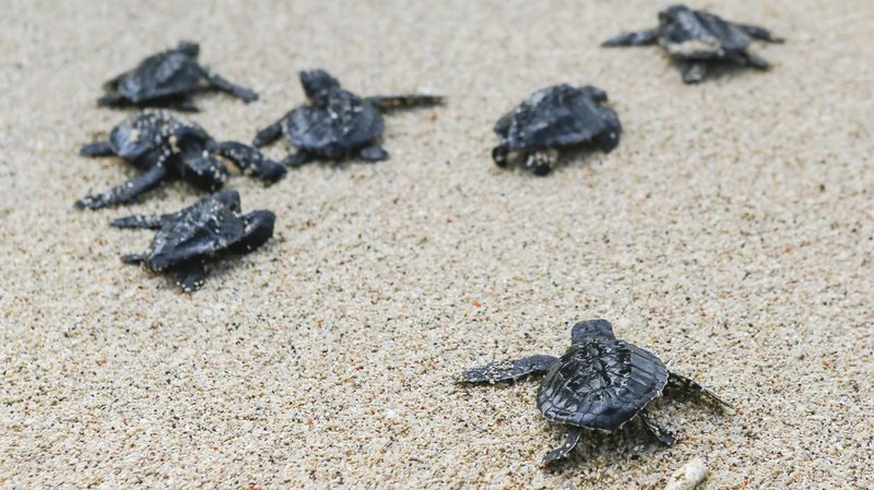 Chypre: une fête de mariage luxueuse sur la plage annulée pour ne pas déranger les tortues marines