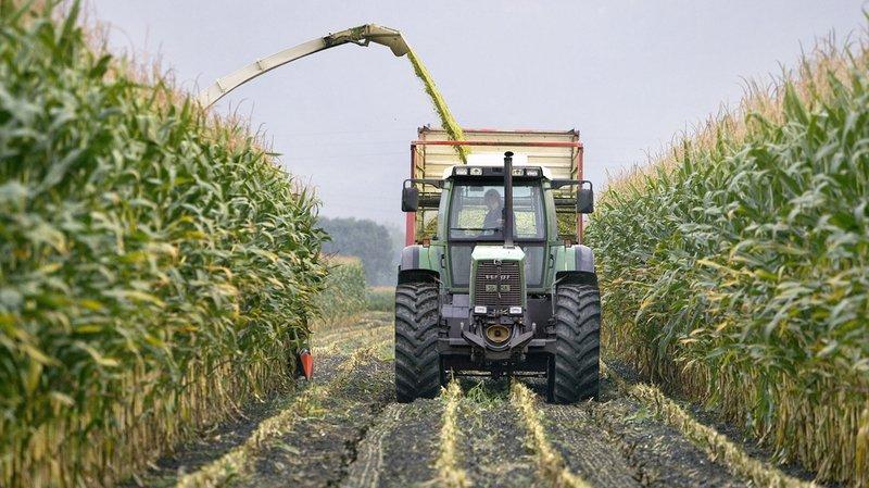 Agriculture: les paysans suisses ont produit un surplus de 100'000 tonnes de céréales