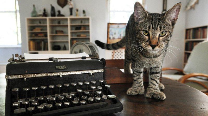 Irma en floride: les 54 chats à six doigts d'Hemingway sains et saufs
