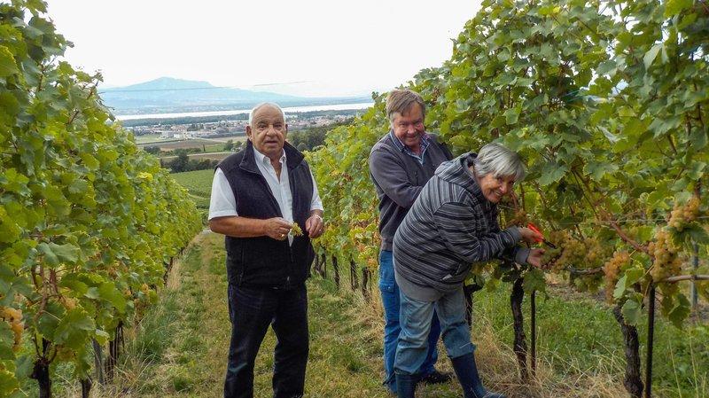 Maurice Guex (à g.), en compagnie du vigneron Eric Barbay, et de son épouse Eliane Guex, ont cueilli hier  les premières grappes de chasselas à distribuer dans des EMS de la région.