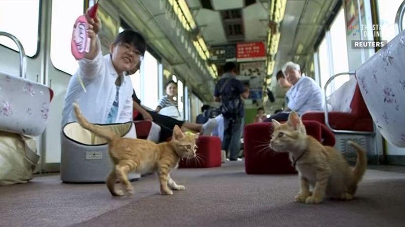 Au Japon, dans un train régional, les passagers peuvent passer du temps auprès d'une trentaine de chats.