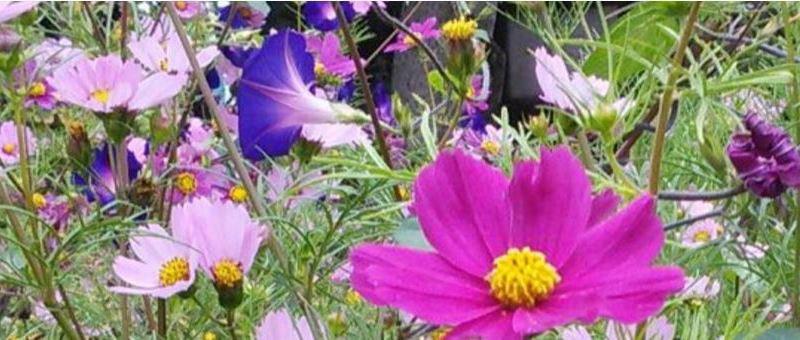 Plantes médicinales tout près de chez nous