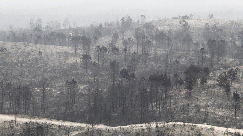Incendies au Portugal: le bilan passe à 43 morts