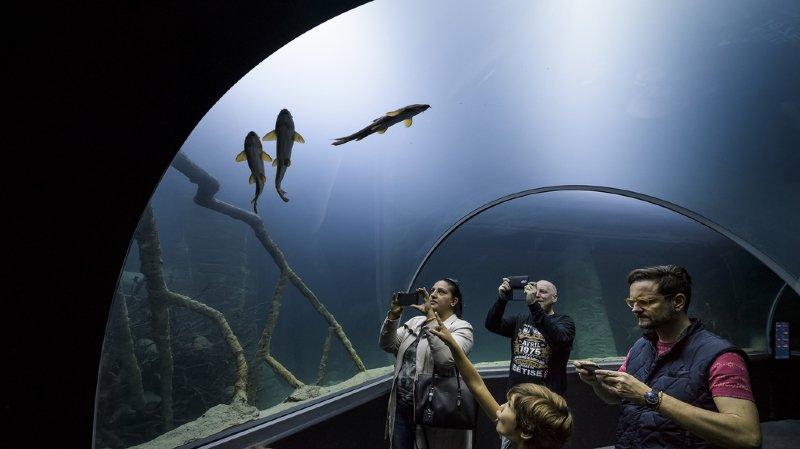 Lausanne: l'aquarium-vivarium Aquatis a ouvert ses portes, attirant de nombreux visiteurs
