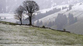Le gel a fait son retour sur une grande partie de la Suisse