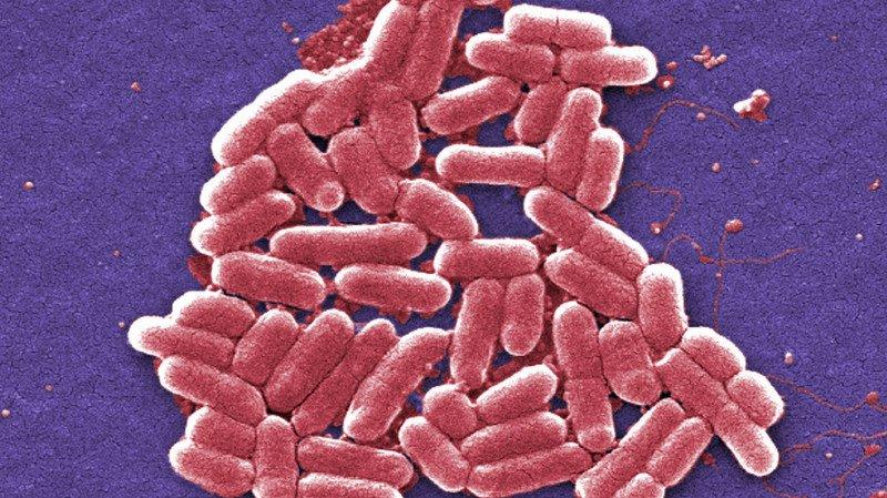 Résistance aux antibiotiques: 700'000 morts chaque année dans le monde, 25'000 en Europe