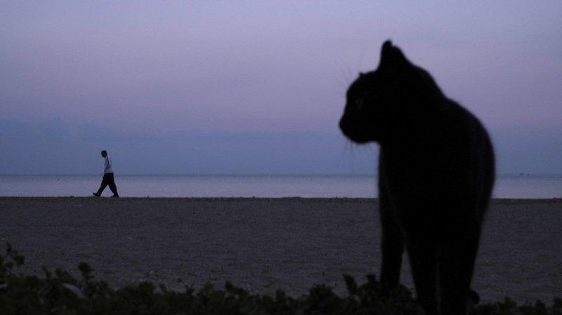 Japon: un chat errant suspecté dans une enquête sur une tentative de meurtre