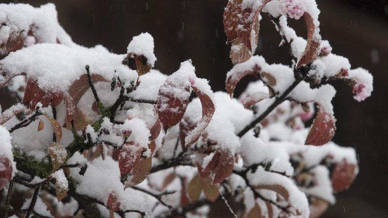 Météo: les hauteurs de la Suisse romande se sont réveillées sous une jolie couche de neige ce lundi matin