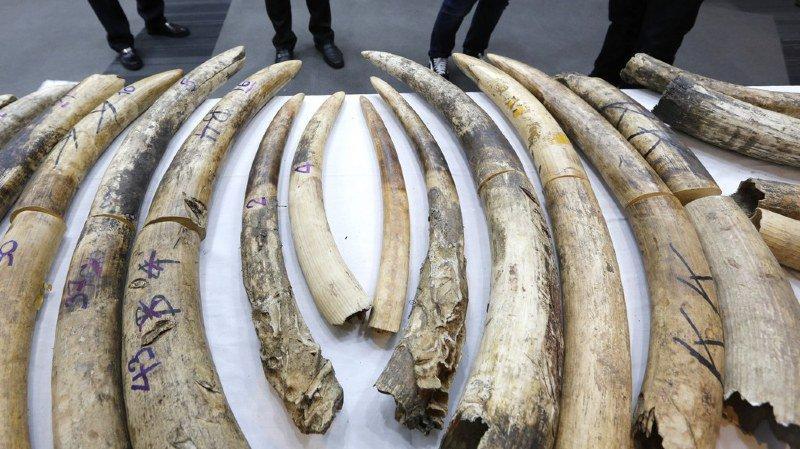 La CITES réglemente le commerce international de plus de 35'000 espèces dans le monde. (illustration)