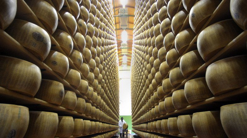 Les producteurs de Parmesan reconnaissent que le bien-être des animaux n'est pas leur priorité actuelle (illustration).