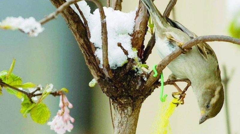 Un programme de contrôle des mélanges de graines pour les oiseaux sauvages et domestiques a été lancé l'an dernier.