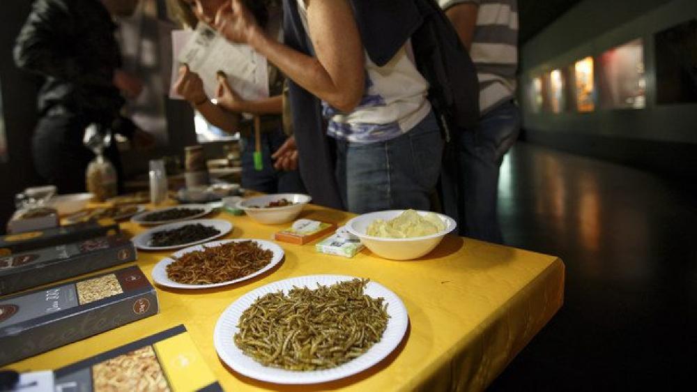 Vers de farine, grillons et criquets sont permis dans l'alimentation humaine.