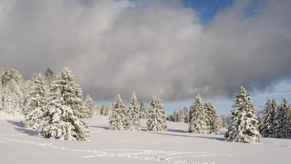 En hiver, restez sur les chemins balisés afin d'éviter de déranger les animaux. Au Marchairuz, cela ne semble pas avoir été le cas. Pour résister aux rigueurs hivernales, les animaux doivent économiser leur énergie.
