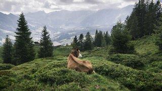 Réchauffement dans les Alpes: les bourgeons apparaissent de plus en plus tôt, même en altitude
