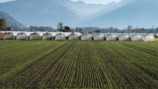 Vaud: une classe spéciale pour l'agriculture biologique