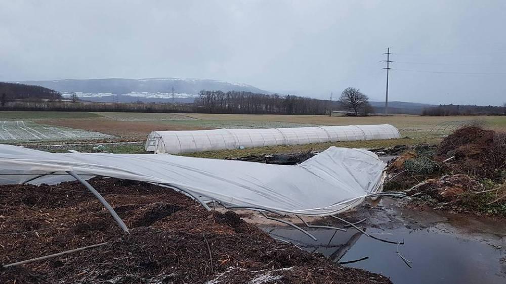 Une des plus grandes serres a été complètement détruite par le vent.