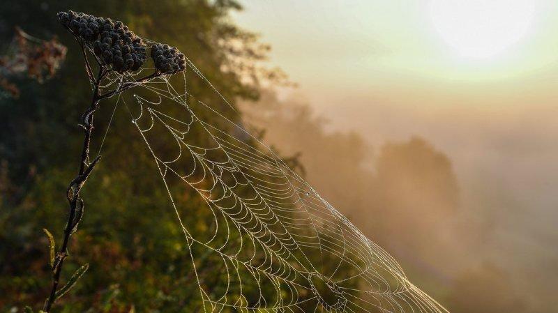 Paléontologie: découverte d'araignées à queue vieilles de 100 millions d'années