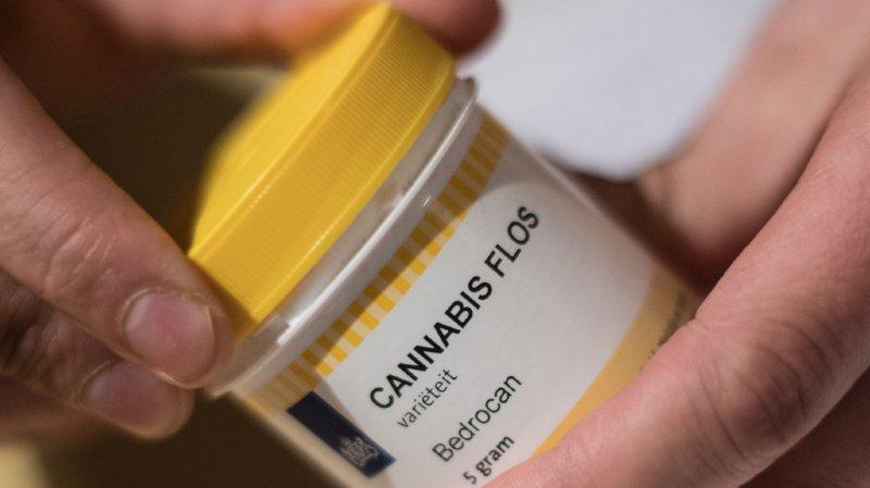 Santé: des projets pilotes pour la distribution légale de cannabis devraient pouvoir être menés