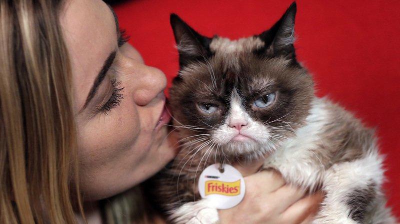 Grumpy Cat s'est fâché tout rouge lorsqu'une entreprise de café a placardé son minois sur des produits non autorisés.